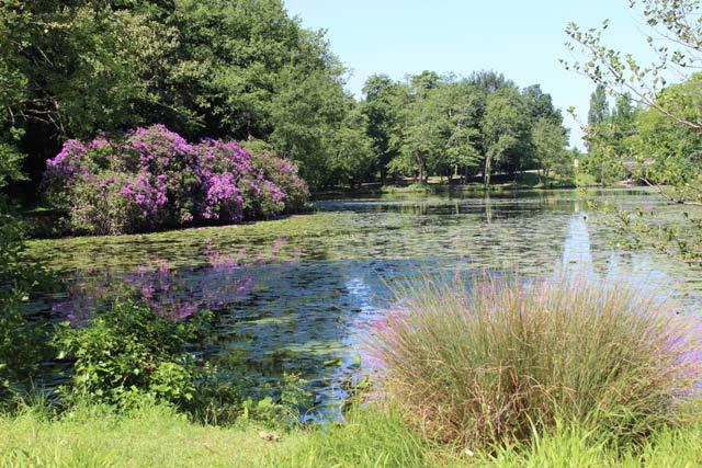 étang_2 - parc Majolan - école Montessori Internationale Bordeaux