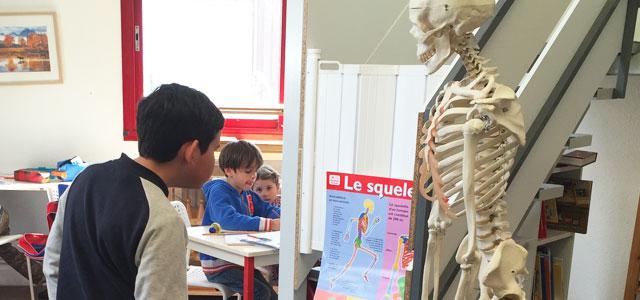 Etudier le squelette humain en Montessori