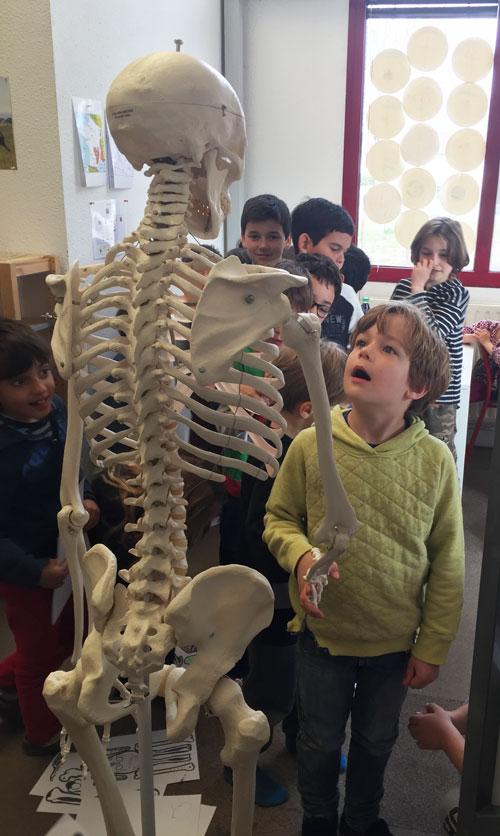 primaire montessori international bordeaux