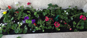 montessori international bordeaux fleurs 1