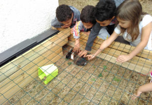 animal montessori bordeaux 1