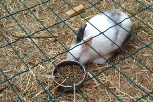animal montessori bordeaux 2