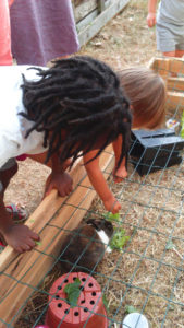 lapins montessori bordeaux
