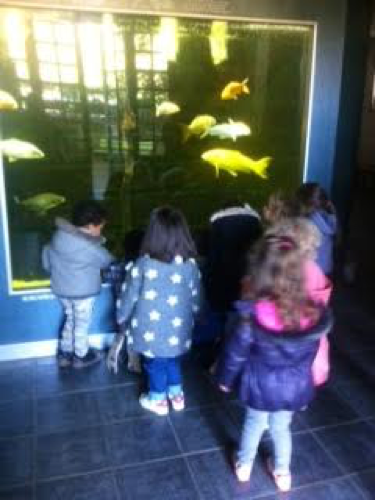 montessori school trip 7