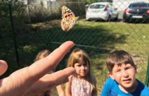 montessori international bordeaux insectes 12
