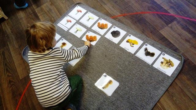 montessori international bordeaux champignons 1