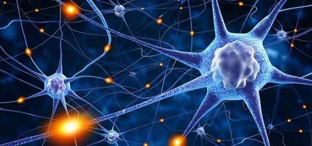 Deux nouvelles formations : neurosciences et handicap