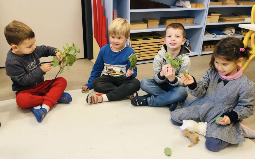Etudier la nature en maternelle